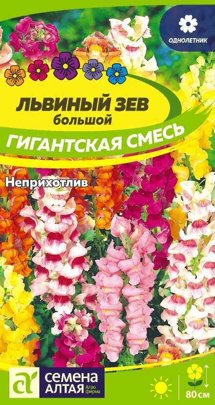 Как цветут цветы львиный зев