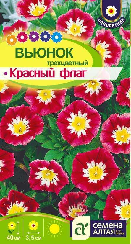 Каталог цветы однолетки