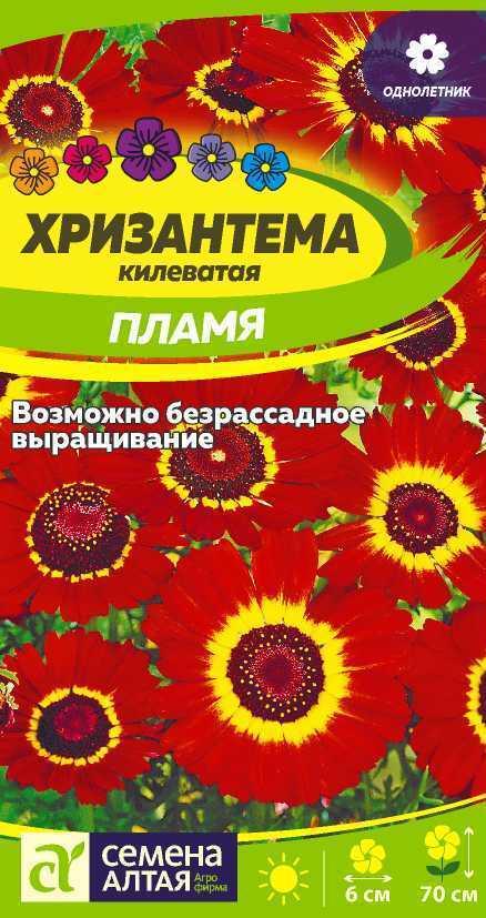 цветы хризантема однолетняя фото