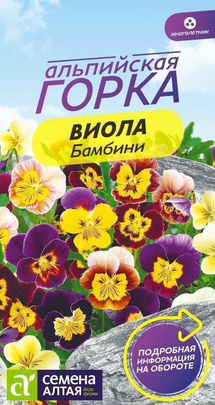 Цветок виола многолетняя цветов