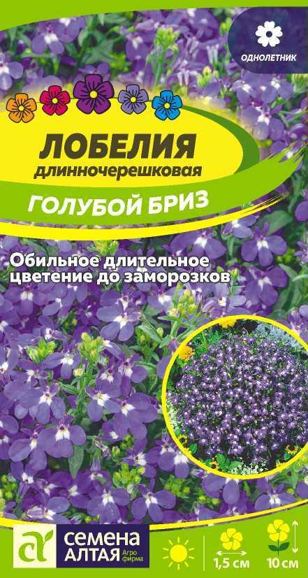 Однолетние цветы лобелия