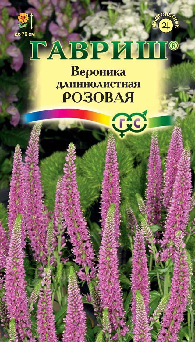 Цветы вероника многолетняя
