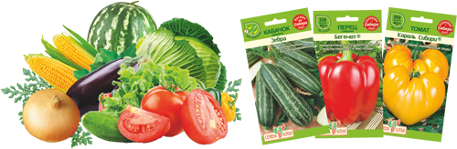 Семена Алтая овощи