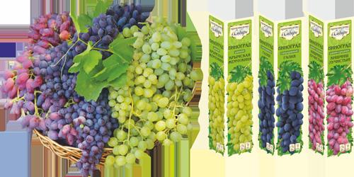 Семена Алтая саженцы винограда